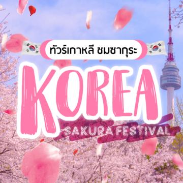 ทัวร์เกาหลี ชมซากุระ KOREA SAKURA FESTIVAL 2019